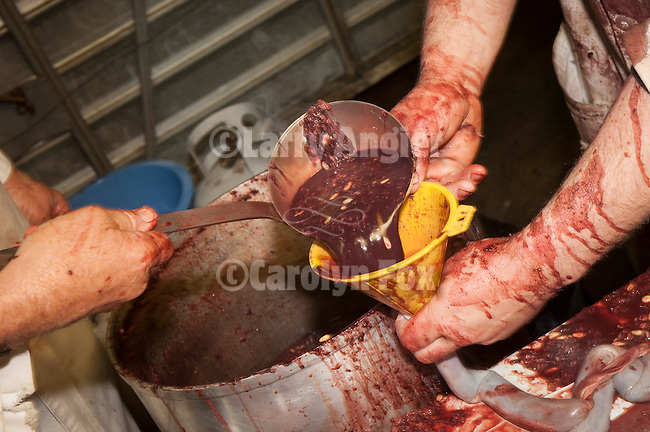 A scoop of the coagulated blood mixed with milk, spices and a hand full of pine nuts are used in making blood sausage (brodies) during the annual hog slaughter and blood sausage making at the Cuneo Ranch, Clinton, Calif.
