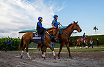 HALLANDALE BEACH, FL - JANUARY 25: Gun Runner with Scott Blasi head to the track to train for Pegasus World Cup Invitational at Gulfstream Park Race Track on January 25, 2018 in Hallandale Beach, Florida. (Photo by Alex Evers/Eclipse Sportswire/Breeders Cup)