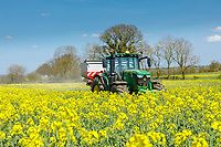 Applying nitrogen to oil seed rape in flower - Northamptonshire, April
