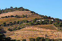 vineyards quinta do infantado douro portugal