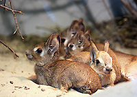 Stock image of tiny rabbits kept in Tier-park Berlin.<br /> <br /> (For Editorial use only)