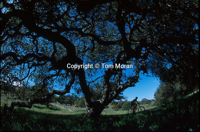 The Sea Otter Classic cross country is contested on an epic 18 mile loop.that takes racers along ridgelines and into valleys filled with large live oak trees on the grounds of Fort Ord near Monterey, California.