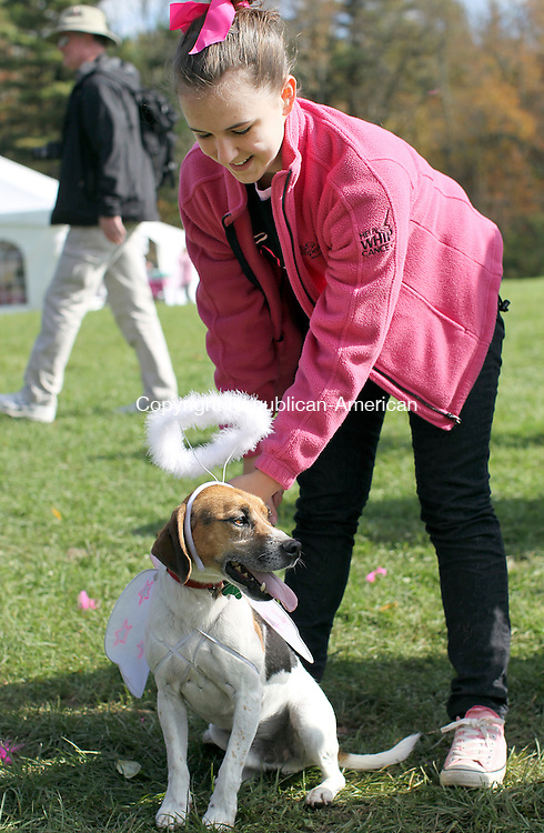 Litchfield, CT-14 October 2011-101411CM04  Catie Kelledes, 16, of New Milford dresses her Beagle dog, Samson before the start of the  the American Cancer Society's Making Strides Against Breast Cancer 5-k walk at the White Memorial Conservation Center in Litchfield Sunday afternoon. The event featured 75 breast cancer survivors, 1000 participants and raised $68,000 for awareness and money to fight cancer while providing hope to those who are facing the disease, said Patrice Bedrosian American Cancer Society, CT State Director of Communications. Kelledes was getting ready Samson, who is the mascot for the Pink Angles, a woman's club of New Milford who came out for the event to support a member who was diagnosed with cancer last year.   Christopher Massa Republican-American