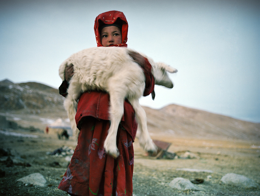 A young niece of the Khan brings a young lamb inside the house so it doesn't dir overnight because of the cold temperature.