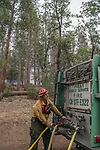 Firefighter supplies hose lays on Chilnualna Falls Road. After hearing the news that the South Fork Fire was 1/4 mile from Wawona, I went back to the fire to see what was happening.  Most of the fire activity last night and this morning early were near Chilnualna Falls Road.  It looked to me that the firefighters had done their jobs.   Structure protection was in place with lots of engine and hose lays all over the place.  I decided to photograph Firefighters today Monday, August 21, 2017.  Photo by Al Golub/Golub Photography.