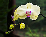 An orchid seen at the Kula Botanical Garden in Maui