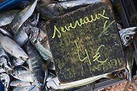 Europe/France/Provence-Alpes-Côte d'Azur/13/Bouches-du-Rhône/Marseille:Marché au poisson sur le Vieux Port  -  Quai des Belges