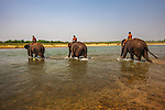 Mahouts ride their Asian elephants (Elephas maximus) home after a thorough cleaning, Nepal<br />