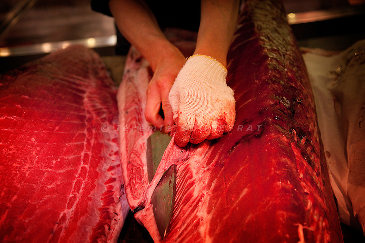Tokyo, 1st of March 2010 - Tuna at Tsukiji wholesale fish market, biggest fish market in the world. 6:30 a.m, a middleman removes fat from a tuna, before selling it on the market to the retailers.