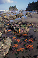 tidepool photos