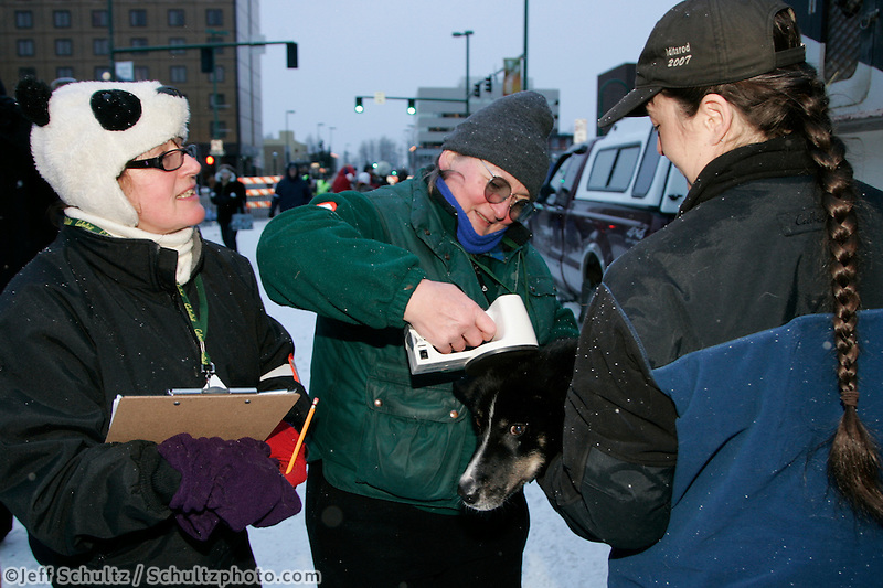 Volunteers Kay Greene (L) and Karen Smith scan on of Jessie Royers dogs to find its micro-chip in Anchorage on Saturday March 1st during the ceremonial start day of the 2008 Iidtarod Sled Dog Race.