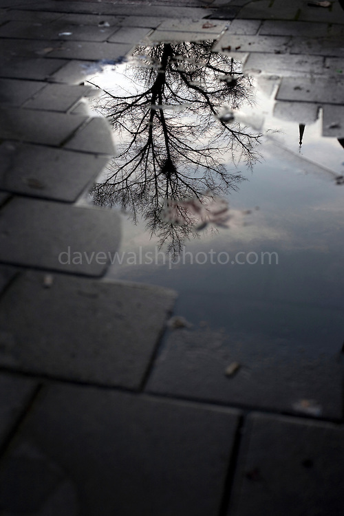 The underworld: Tree of life - reflection of winter tree in puddle on the street in Amsterdam, the Netherlands. Could this be a sign of Yggdrasil, the world tree of Norse mythology?