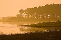 Chincoteague Assateague Island Virginia Maryland Eastern Shore