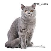 Xavier, ANIMALS, REALISTISCHE TIERE, ANIMALES REALISTICOS, FONDLESS, photos+++++,SPCHWS635,#A#
