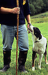 Shepherd with sheepdog, Cumbria, UK