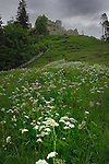 Ehrenberg castle and spring meadows. Reutte district, Austria.