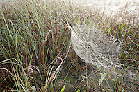 Dewy Spiderweb, Everglades National Park, Florida