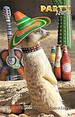 Samantha, ANIMALS,  photos,+meerkat,++++,AUKPLP075,#A# Humor, lustig, divertido