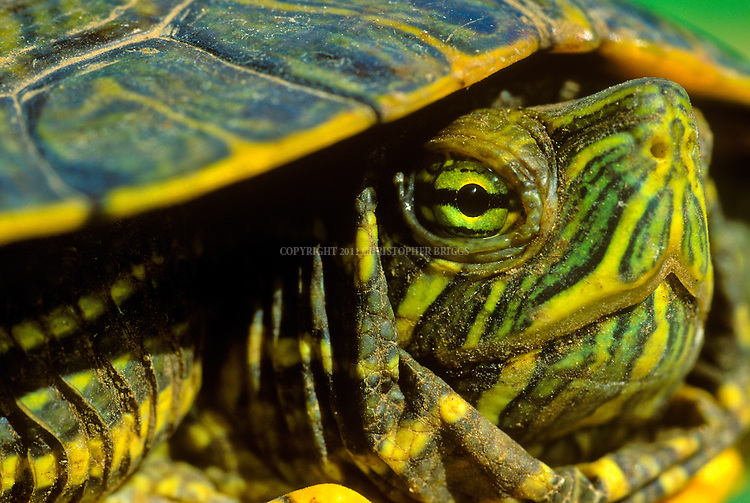 Turtle close-up.