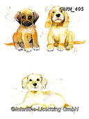 Kate, CUTE ANIMALS, LUSTIGE TIERE, ANIMALITOS DIVERTIDOS, paintings+++++,GBKM405,#ac#, EVERYDAY ,dogs,dog