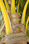 Palm trunk, Belize