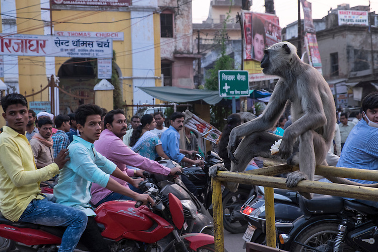 Surprisingly, this monkey seems to oversee the traffic in a people-clogged intersection in the ancient city of Varanasi, near the Ganges River.