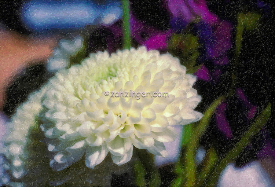 Chrysanthemum beautiful flower, genus, Chrysanthemum, Digital oil painted texture,  Beautiful, Unique