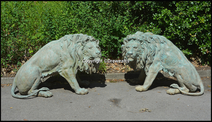 BNPS.co.uk (01202 558833)<br /> Pic: Dreweatts/BNPS<br /> <br /> A pair of male lions estimated at &pound;5,000.<br /> <br /> A remarkable collection of giant bronze animals has emerged for auction and is tipped to sell for &pound;40,000.<br /> <br /> The menagerie of exotic animals includes a 7ft tall giraffe, a 9ft long elephant and a 1,800lb stag.<br /> <br /> Also included in the collection are a lion, a cheetah, a panther, a rhinoceros, a hippopotamus, a crocodile, a deer, a wild boar, a horse and various bronze birds.<br /> <br /> They were consigned by a vendor in Berkshire who collected the bronze animals with her late husband over the course of 20 years.