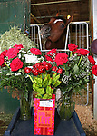 Maximum Security celebrates his third birthday at Monmouth Park on Tuesday May 14th with chocolate roses sent to him by adoring fan Kristina Blewitt. Photo By Bill Denver/EQUI-PHOTO