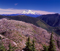 Mt. Rainier from Mt. Margaret Backcountry, Mt. St. Helens National Volcanic Monument, Washington, US