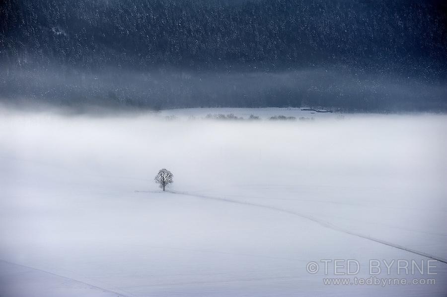 Lone tree in a misty, winter landscape