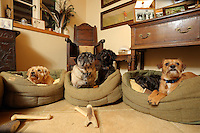 FAO JANET TOMLINSON, DAILY MAIL PICTURE DESK<br />Pictured: SOme of the dogs spend the night in the owners' house Wednesday 23 November 2016<br />Re: The Dog House in the village of Talog, Carmarthenshire, Wales, UK