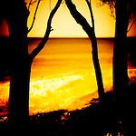 Silhouette of trees near a beach