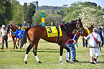 HOT SPRINGS, AR - APRIL 14:Count Fleet Sprint Handicap. Oaklawn Park on April 14, 2018 in Hot Springs,Arkansas. #3 Wynn Time  (Photo by Ted McClenning/Eclipse Sportswire/Getty Images)