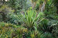 Le Domaine du Rayol:<br /> Agave sisalana (v&eacute;rif), brom&eacute;liac&eacute;es, Yucca elephantipes, Chamaerops humilis...