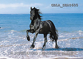 Bob, ANIMALS, collage, horses, photos(GBLASEA0605,#A#) Pferde, caballos