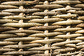 Sussex, England. Hazel fence, traditional woven twigs.