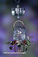 01162-08804 Ruby-throated Hummingbirds (Archilochus colubris) at Perry Canning Jar Feeder with clear nectar protector Shelby Co.  IL