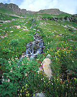 A high alpine stream cascades from upper colorful Democrat Basin, Elk Mountains, Colorado
