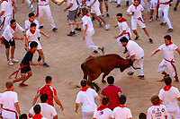 Europe,Spain,Pamplona,San Fermin festival 2018, Encierro,  small brave cows are in fight with the runners in the plaza de Toros