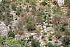 olive groves on terraces of dry masonry walls in the Barranco de Biniaraix<br /> <br /> olivos en terazas de muros de piedra seca en el Barranco de Biniaraix (cat.: Barranc de Biniaratx)<br /> <br /> Olivenb&auml;ume auf Terrassen aus Trockenmauern in der Schlucht von Biniaraix<br /> <br /> 4197 x 2844 px<br /> Original: 35 mm slide transparency