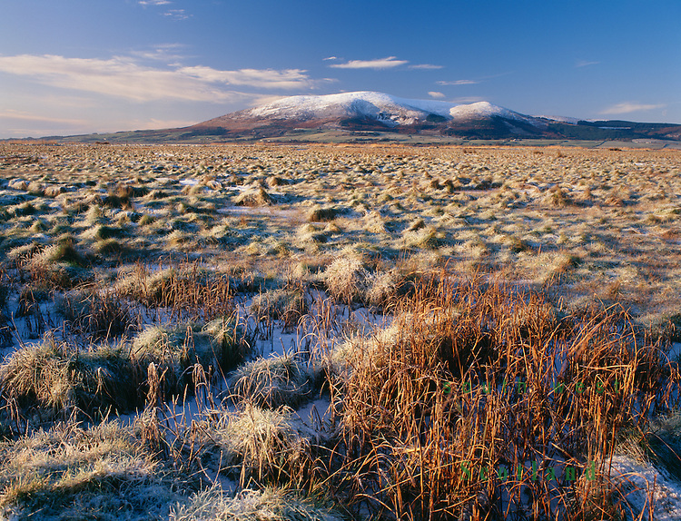 Caerlaverock Nature Reserve looking across Nith Estuary to a snow topped Criffel in the Nith Estuary National Scenic Area near Dumfries Scotland UK