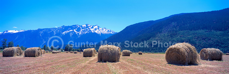 Harvested Grain Field on Farm, Pemberton Valley near Whistler, BC, British Columbia, Canada - Southwestern BC Region, Coast Mountains - Panoramic View