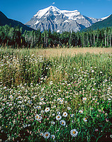 Mount Robson, the highest mountain in the Canadian Rockies @ 12,972ft (3954m)