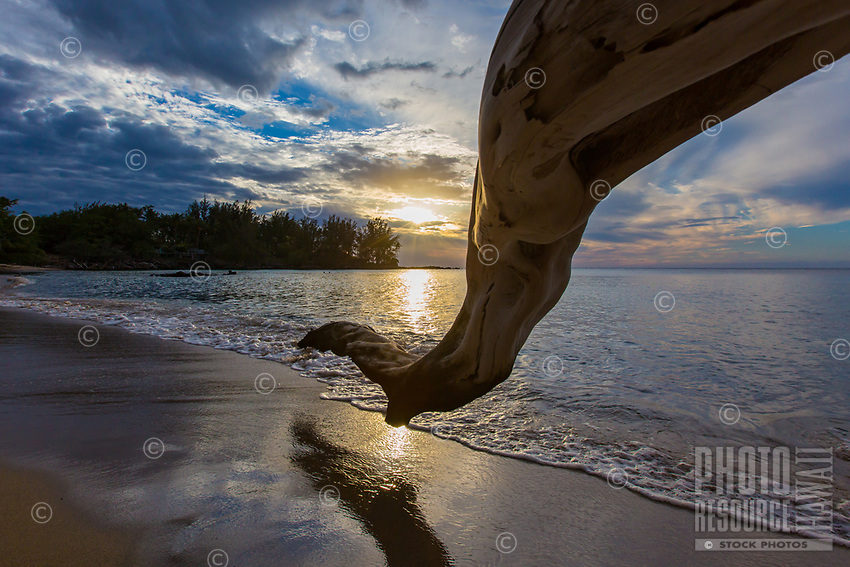 Composed Reflection: A kiawe tree branch and its reflection extend toward sunset at popular Waialea Beach, Big Island of Hawai'i.
