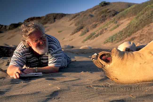 Naturalist observes Elephant Seals up close on sand beach at Piedras Blancas, near San Simeon, California