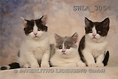 Carl, ANIMALS, photos, 3 kitten(SWLA3054,#A#) Katzen, gatos