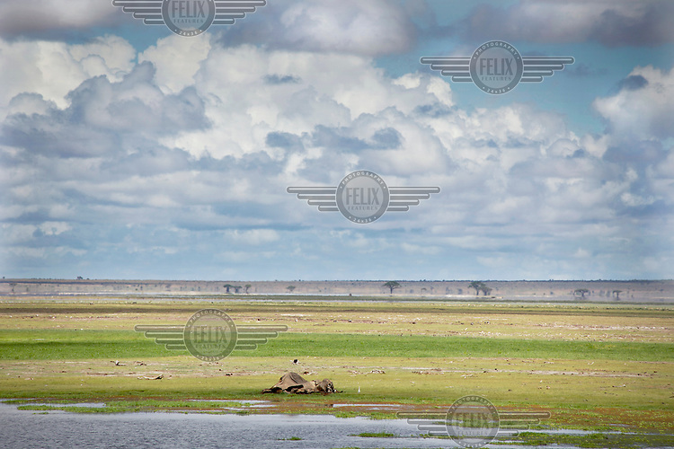 An elephant carcass lies near a swamp in Amboseli National Park. The elephant probably died before the rains arrived stopping a long spell of drought in Kenya.
