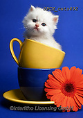 Xavier, ANIMALS, REALISTISCHE TIERE, ANIMALES REALISTICOS, cats, photos+++++,SPCHCATS892,#a#, EVERYDAY