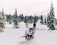 Dogteam in the Alaskan Wilderness, Dog musher, Daryl L. Hunter, Hatcher Pass, north of Willow AK